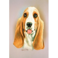 Robert J. May Head Study Print - Basset Hound