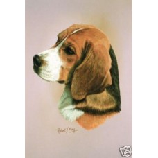 Robert J. May Head Study Print - Beagle