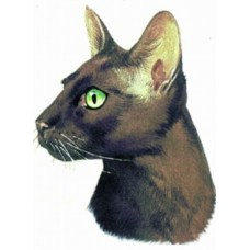 Embroidered Oriental Shorthair Cat BT2521