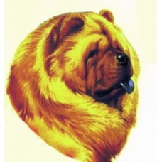 Embroidered Chow Chow BT2362