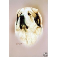 Robert J. May Head Study Print - Great Pyrenees