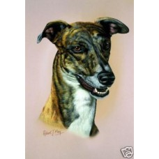 Robert J. May Head Study Print - Greyhound