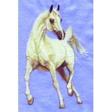 Embroidered Arabian Horse BT2318