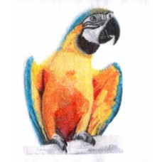 Embroidered Parrot BT4599