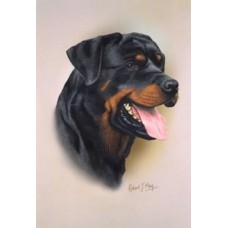 Robert J. May Head Study Print - Rottweiler