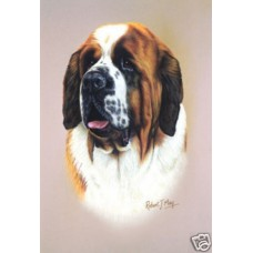Robert J. May Head Study Print - Saint Bernard