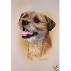 Robert J. May Head Study Print - Border Terrier