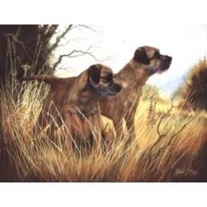 Robert J. May Open Edition Print - Border Terrier 9